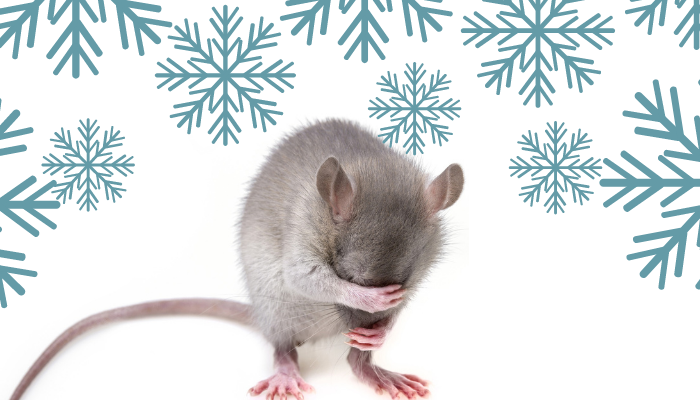 What Happens to Pest during the Winter and Do I Need Pest Control