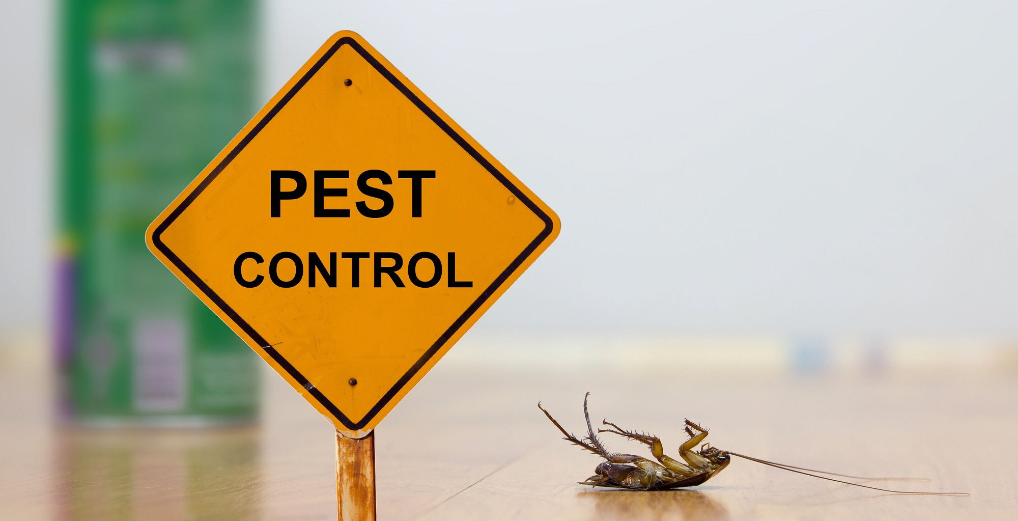 pest prevention during the winter