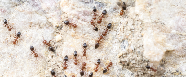 Questions on ants